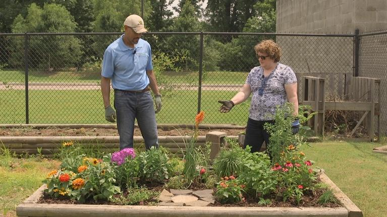 The Family Plot: Planting a Butterfly Garden & Japanese Maples