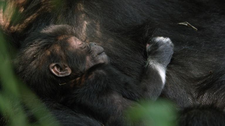Animal Babies: First Year on Earth: Baby Nyakabara