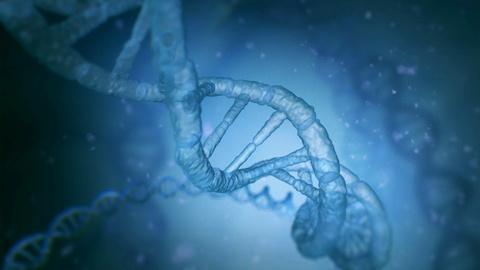 The Gene Doctors -- The Gene Doctors