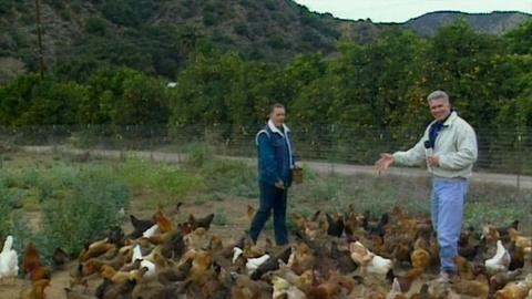 Visiting with Huell Howser -- Happy Chickens