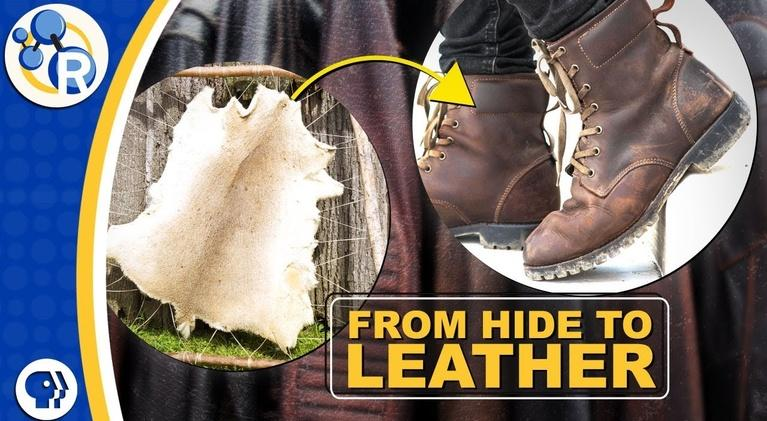 Reactions: How is Leather Made?
