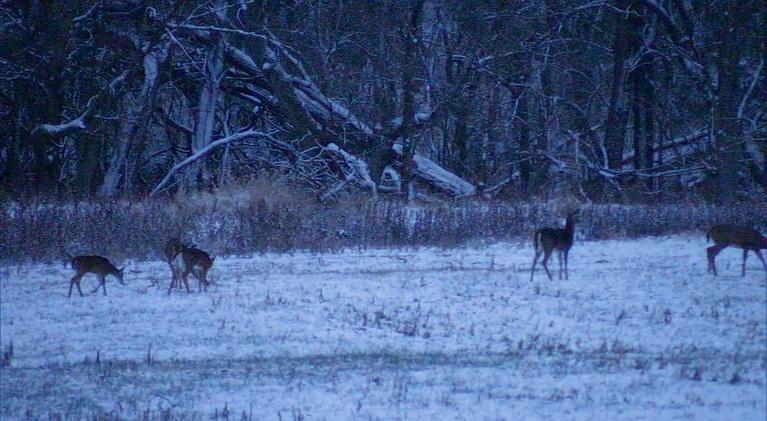Kentucky Afield: Deer Hunt on the First Snowfall; Heroic Young Hunter