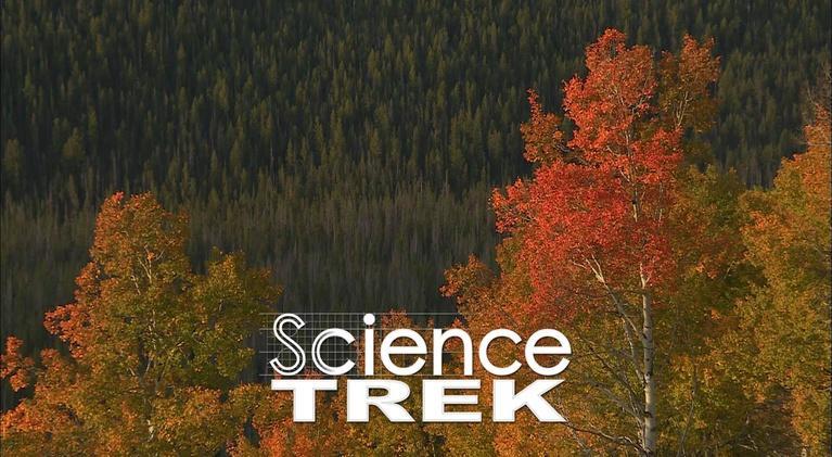 Science Trek: Trees: Tree Truths