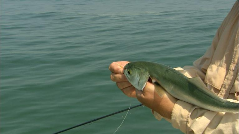 Carolina Outdoor Journal: Bluefish on a Fly