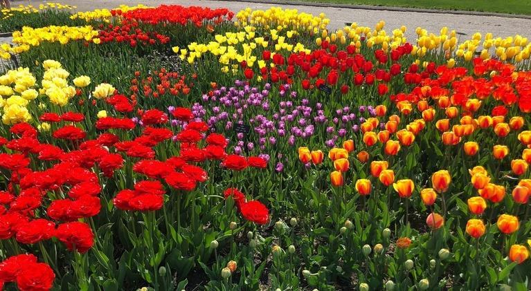 Prairie Yard & Garden: Spring Flowers