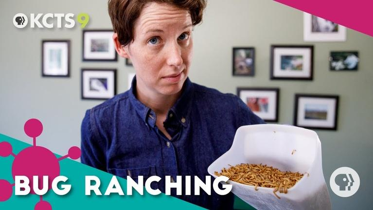 ReInventors: How bug ranching can fix the food system