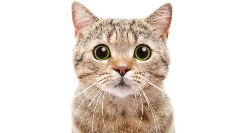 NOVA -- Can Cat Poop Make You Crazy?