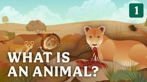 Crash Course Zoology : What is an Animal?
