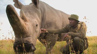 Extinction: The Facts | Extinction: The Facts