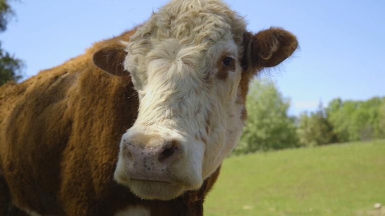 Destination Michigan: Sasha Farm Animal Sanctuary