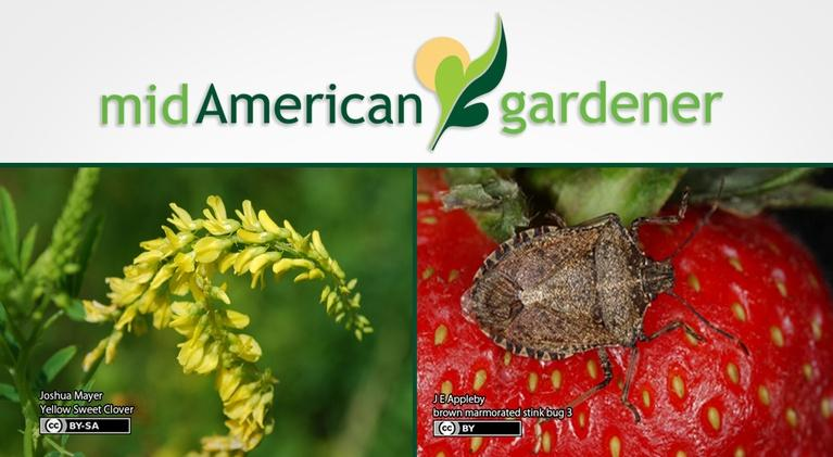 Mid-American Gardener: Mid-American Gardener with Jennifer Nelson, May 31, 2018