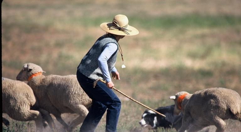 Colorado Experience: The Meeker Classic Sheepdog Trials