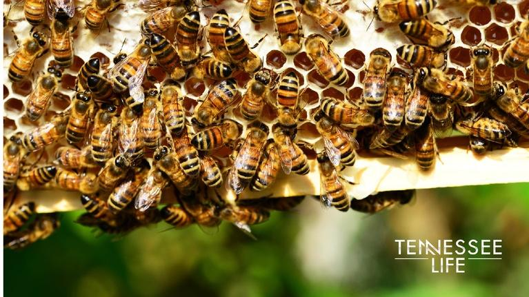 Tennessee Life: Tennessee Life - 601 - The Gardens & the Bees