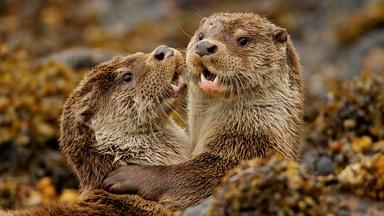 Charlie & the Curious Otters