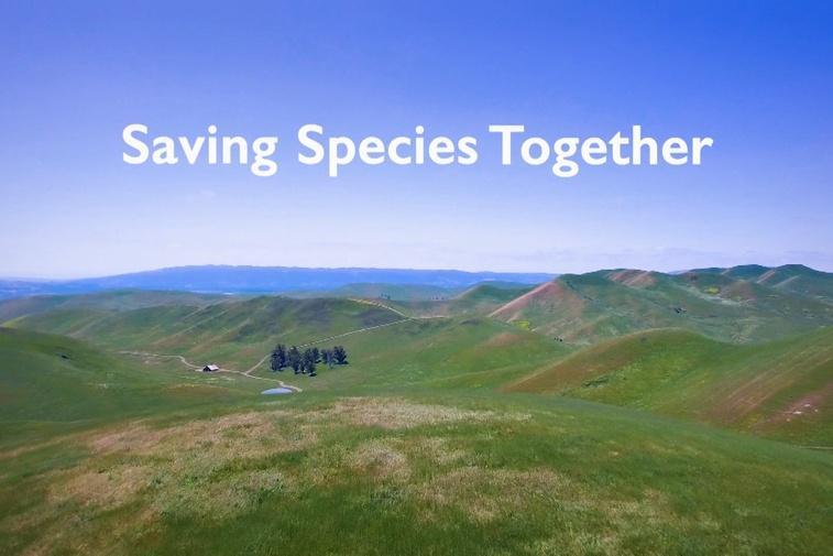 ViewFinder: Saving Species Together Thumbnail