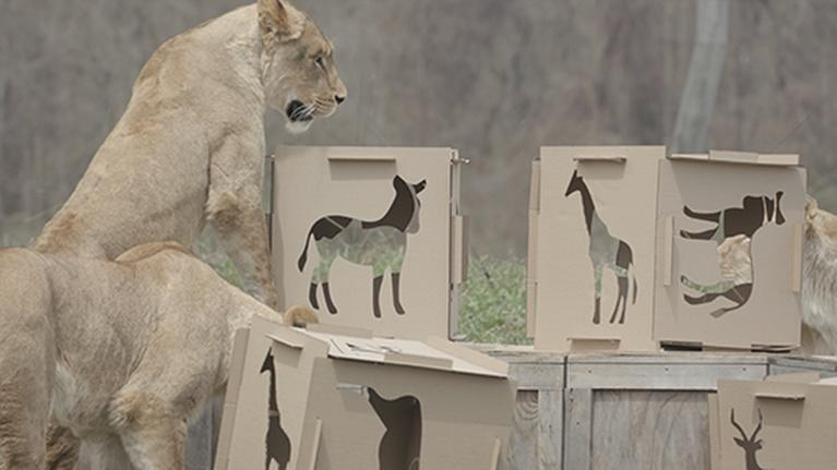 Broad and High: CCAD and the Columbus Zoo