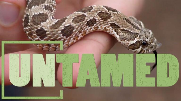 Untamed: Untamed: Snakes.