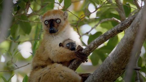 """Nature -- Preview of Primates: Episode One """"Secrets of Survival"""""""