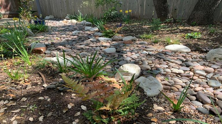 Central Texas Gardener: Dry Creek Bed Design