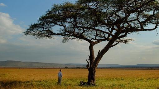 Nature : The Serengeti Rules