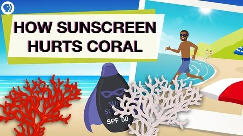 Above The Noise -- Is Your Sunscreen Hurting Coral Reefs?