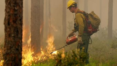 Nature -- How Florida Firefighters Fight Wildfires with Fire