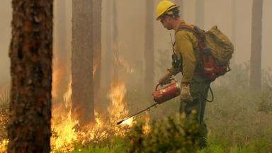 How Florida Firefighters Fight Wildfires with Fire