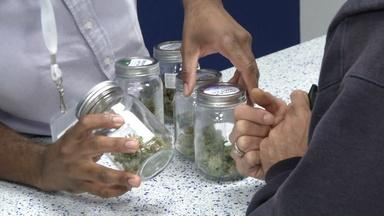 Marijuana groups launch campaigns to reach voters