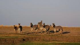 Meeting Winnie the Zebra | Season 1 Episode 3 | Nature's Great Race