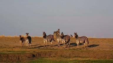Clues to the Zebra Odyssey