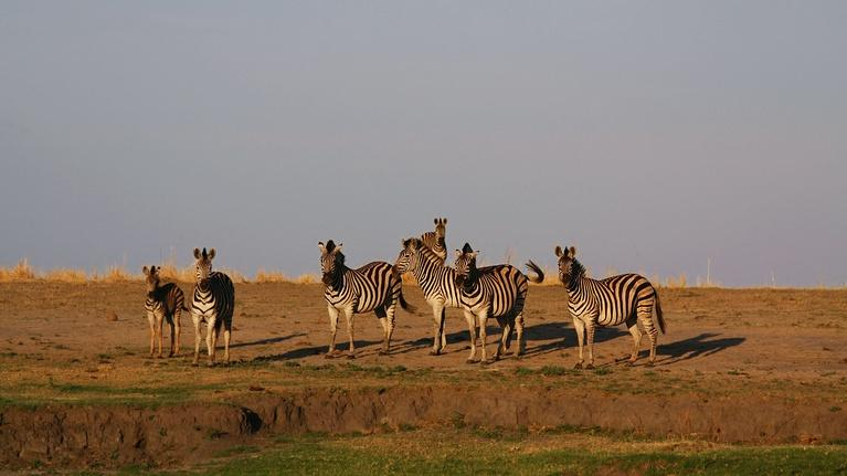Nature's Great Race: Clues to the Zebra Odyssey