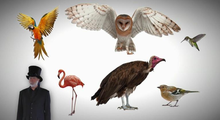 Steve Trash Science: Birds Are Amazing/Renewable vs Non-Renewable
