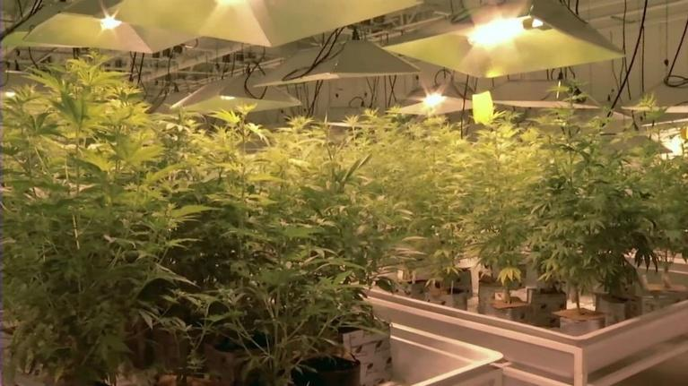 NJTV News: Are NJ's laws keeping up with the medical pot industry?