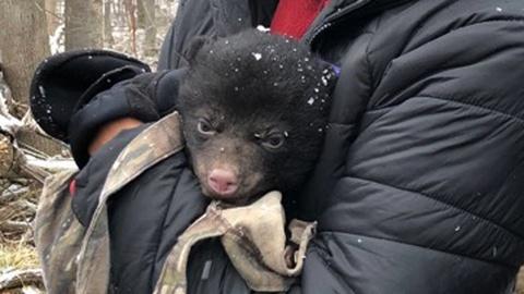 Nature -- Bear Cub Check Up