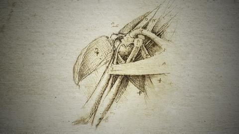 NOVA -- How Leonardo da Vinci Used Anatomy to Inform his Paintings