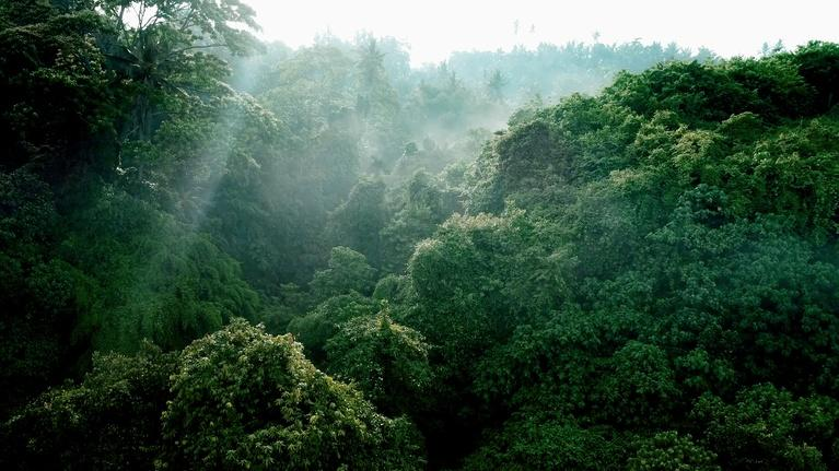 Environment: Flying Through the Amazon's Prehistoric Air