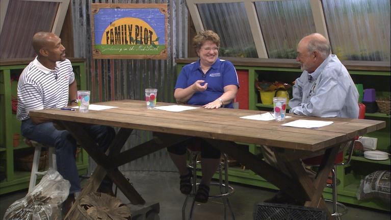 The Family Plot: Lawn Alternatives & Pesticides