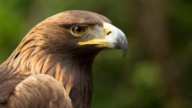 Eagle Power Preview