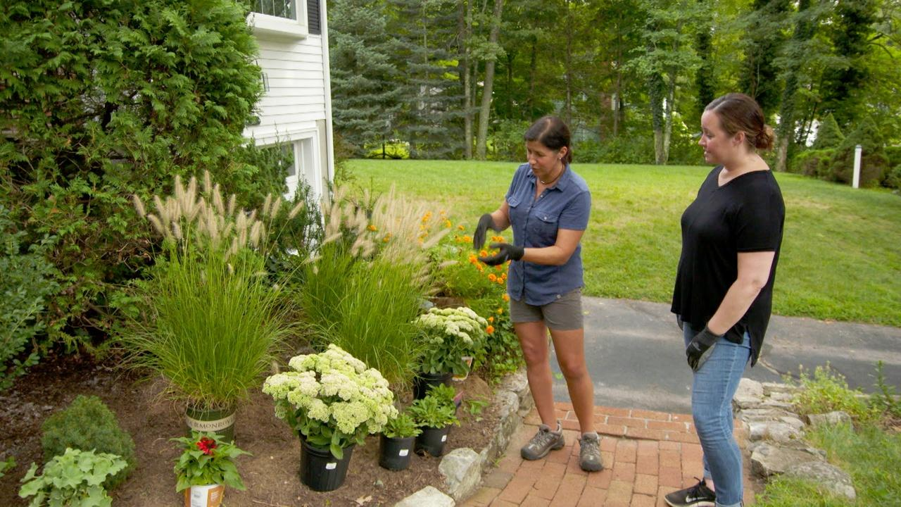 Scorched Floor, Hardy Plantings | Ask TOH