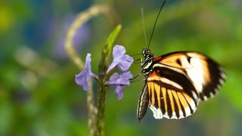Nature -- Sex, Lies and Butterflies