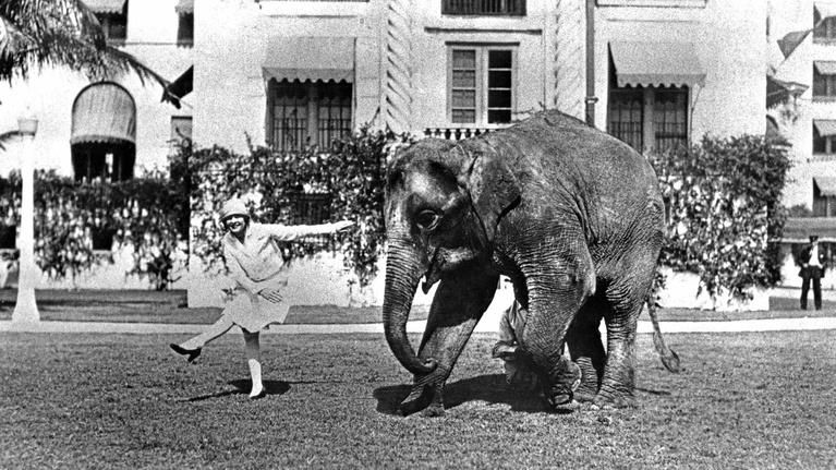 WLRN History: Rosie the Elephant
