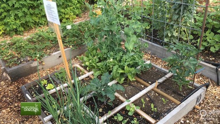 You Bet Your Garden: You Bet Your Garden Ep: 26
