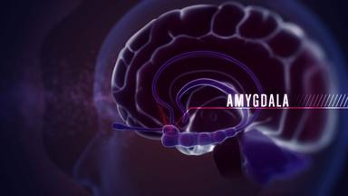 NOVA: Neuroscience of Violence