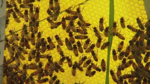 S1 E1: Bee Killer