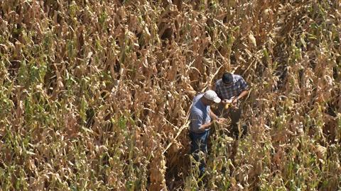 America Revealed -- Factory Farming