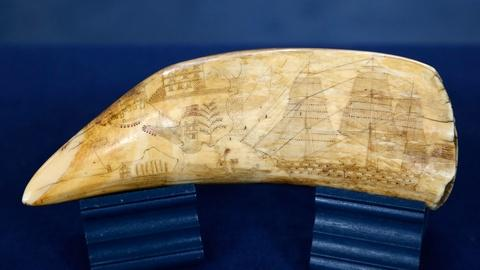 Antiques Roadshow -- S18 Ep2: Appraisal: Scrimshaw Whale Tooth, ca. 1840