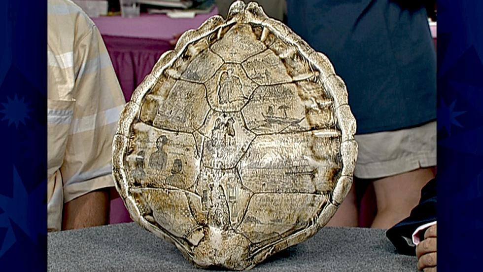 S18 Ep30: Appraisal: Carved Turtle Shell image