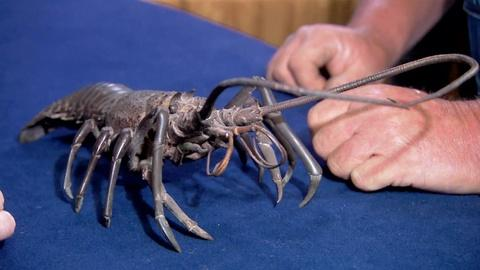 Antiques Roadshow -- S19 Ep7: Appraisal: 19th-Century Japanese Bronze Crayfish