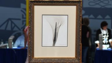 """Appraisal: 1931 Dain Tasker """"X-ray of a Lily"""" Photo"""