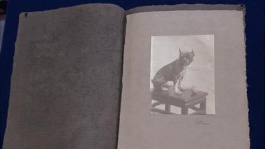Appraisal: Imogen Cunningham Platinum Print, ca. 1910